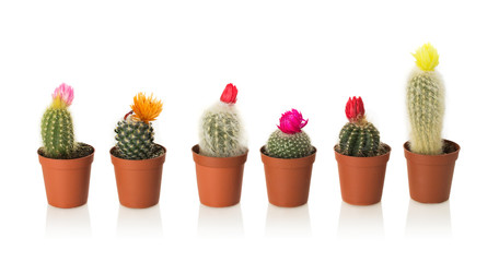 Collection of cactuses in a pot on white background