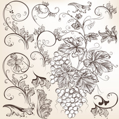 Collection of vector  floral decorative elements for design