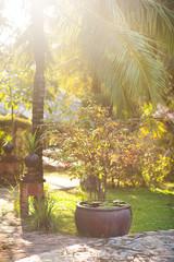 Wall Mural - Green tropical garden