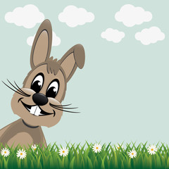 brown bunny look from side daisy meadow