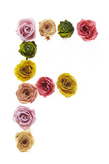 Rose font F