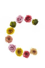 Rose font C