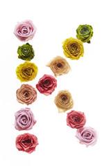 Rose font K