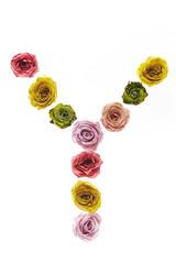 Rose font Y