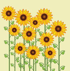vector sunflower greeting card background