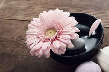 Photo sur Plexiglas Gerbera Pink gerbera in black pot with stones