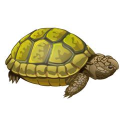 illustration of little turtle