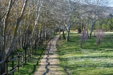 Precioso camino rural en el campo en primavera