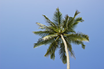 Palm at blue sky