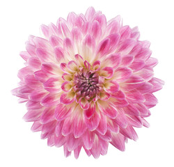 Cadres-photo bureau Dahlia dahlia