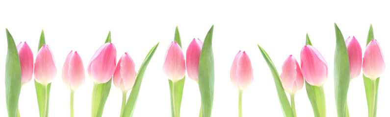 Banner - Pink Tulips