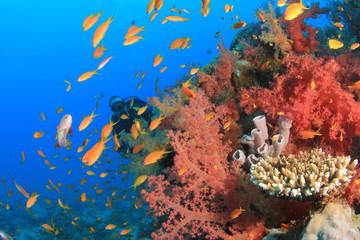 Coral, fish and scuba diver
