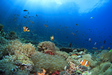 Coral Reef Underwater with Anemonefish