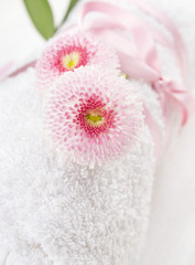 two Pink daisies flowers on White rolled up towel , close up