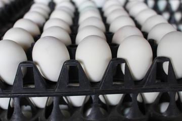 Carton of fresh brown egg