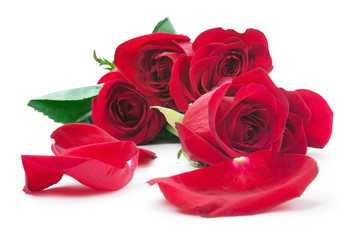 red roses and the scattered petals
