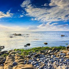 sea wave bring seaween
