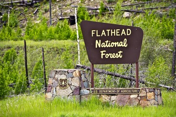 Wall Mural - Flathead National Forest