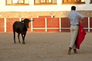 the bullfighter placing