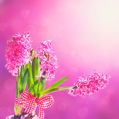 Beautiful flowers of pink hyacinth on blurred background.
