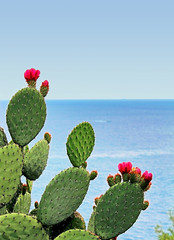 Foto auf Acrylglas Kakteen cactus fleuri face à la mer