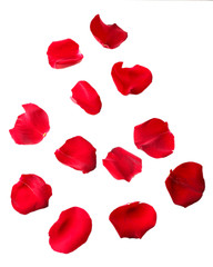 Beautiful red rose petals, isolated on white
