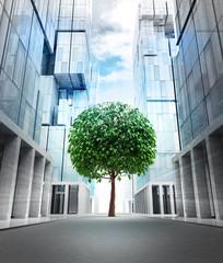 big green leafy tree in new modern business city street