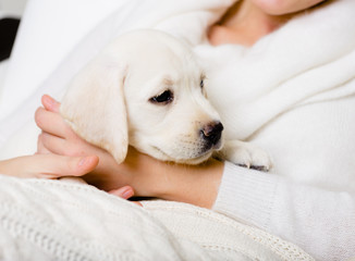 Closeup of puppy on the hands of woman in white sweater