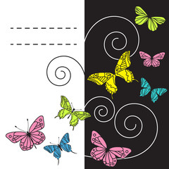 Monochrome background with colorful butterflies. Vector illustra