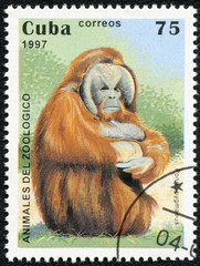 stamp printed in the Cuba, shows Pongo pygmaeus