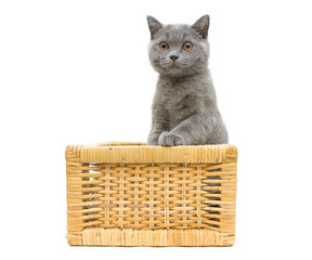 kitten sitting in a wicker basket on a white background
