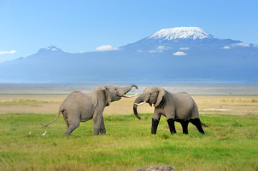 Elephant with Mount Kilimanjaro Wall mural
