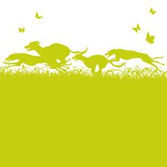 Fototapete - Grashalme und laufende Hunde