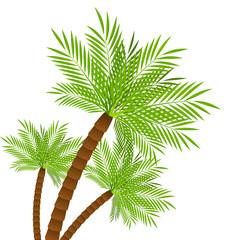 Three palm trees on white