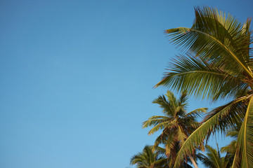 A image of  palm trees and the blue sky