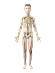 anatomy of a boy - the skeleton