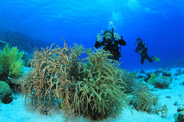 Scuba diving on coral reef