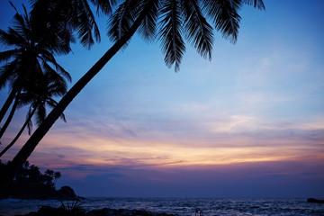 blue sunset and palm . Sri Lanka beach