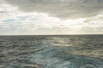 Seagulls and Sea Sunset