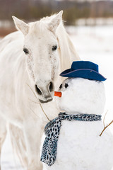 Fototapete - Grey horse eating a carrot-nose of snowman