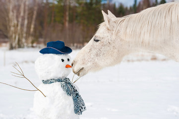 Portrait of grey horse with a snowman