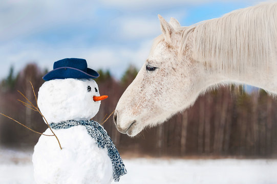 Portrait of grey horse with snowman