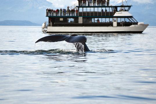 Alaska - Whale Watching Adventure