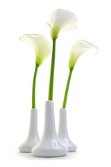 Calla lilies in white vases isolated on white background