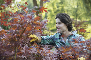 A woman in a tree nursery, pruning the leaves of an acer tree.