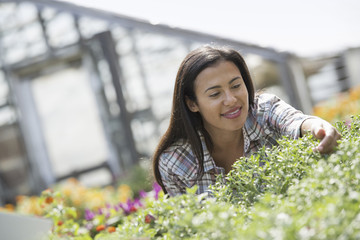 A woman in an organic nursery greenhouse.