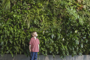 Outdoors in the city in spring. An urban lifestyle. A young boy looking up at a wall covered with lush foliage, ferns and bright green leaves.