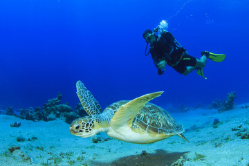 Sea Turtle and Scuba Diver