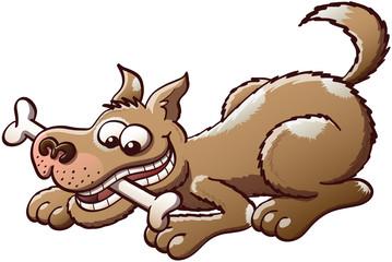 Happy dog chewing a bone