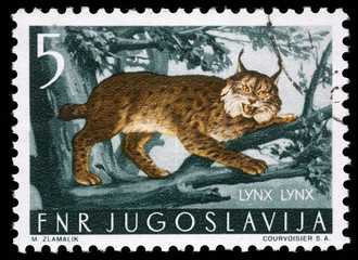 Stamp printed in Yugoslavia shows the Lynx